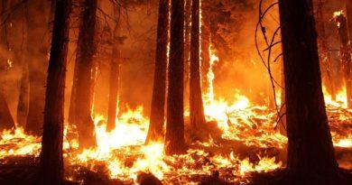 Dietro gli incendi in Amazzonia: è il mercato, amico! 4