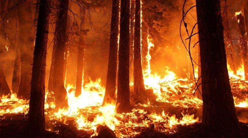 Dietro gli incendi in Amazzonia: è il mercato, amico! 1