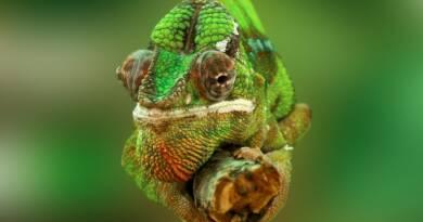 Il governo dei camaleonti 3